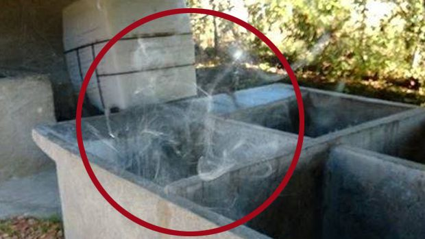Real Ghost Pictures: The Skeleton of Vennes, witnessed as the photographer was eating his egg sandwich, the bread toasted with the image of Elvis.