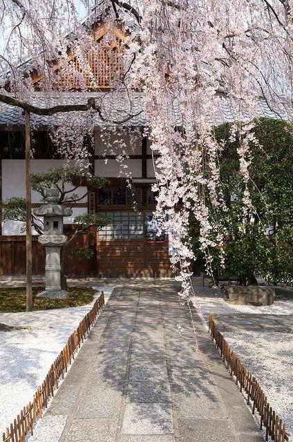 Blooms--Kyoto