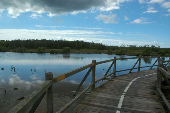 Boondall Wetlands bike path