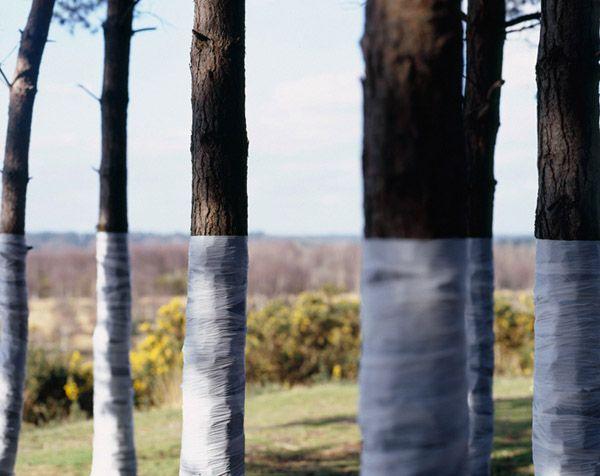 Tree, Line, Beautiful Wrapped Tree Installations by Zander Olsen