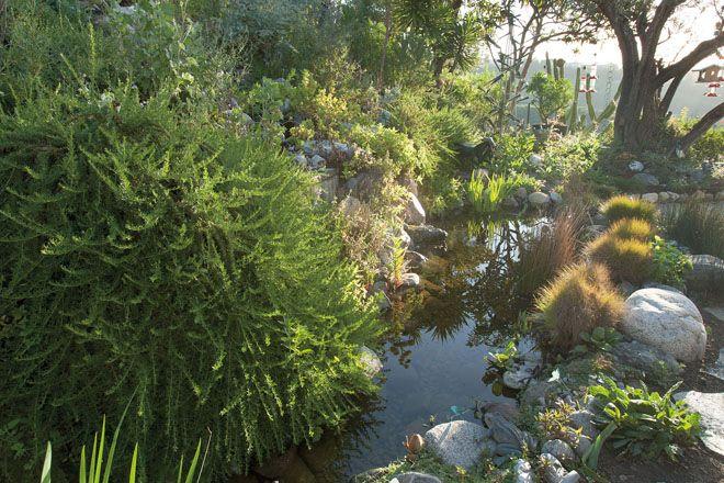 Reconciliation Ecology Plants Garden Native Plants
