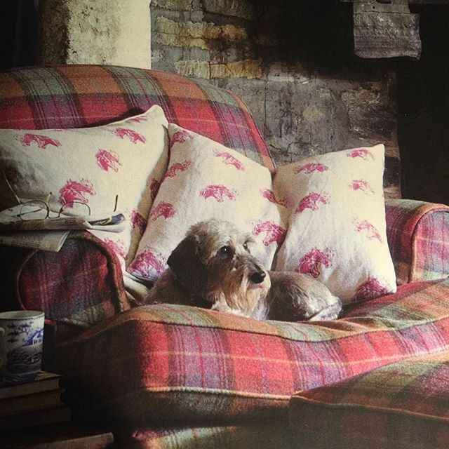 From the November issue of British Country Living. Can you see why it's my favourite magazine? .  @countrylivinguk #favourite