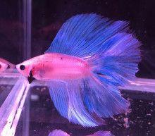 【門真店】熱帯魚・金魚、新入荷! 【AQUA&MINI ANIMAL】NOAH'sARK (熱帯魚 海水魚 金魚 水草 小動物)