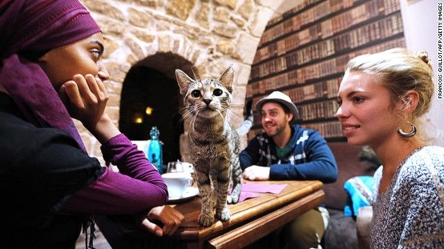 Cat cafes have moved out of Taiwan, through Japan, and now have spread across the world. This is the first cat cafe in Paris, which opened i...