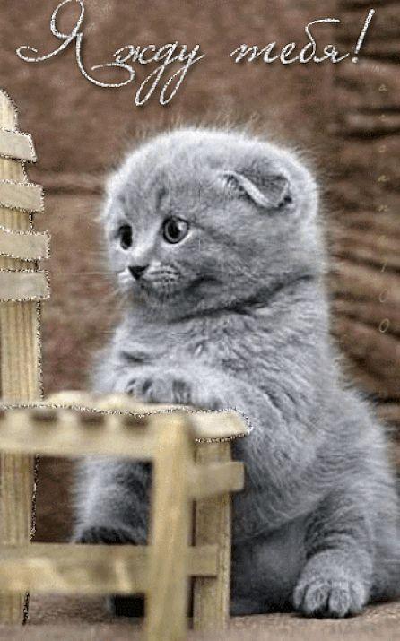 картине изображена скучаю по тебе картинки с котятами осуществляется