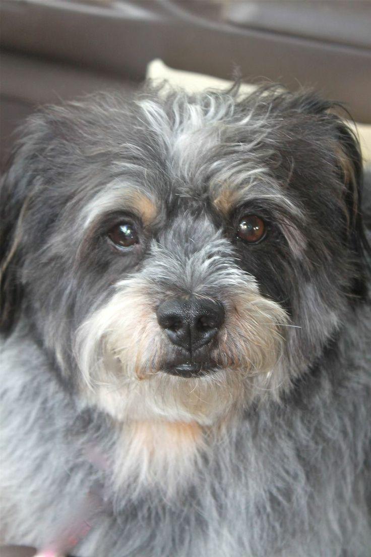 Shaggy Dog Adoption Texas