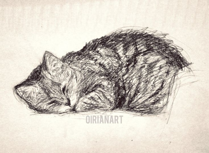 First drawing of the year, my cat Manna