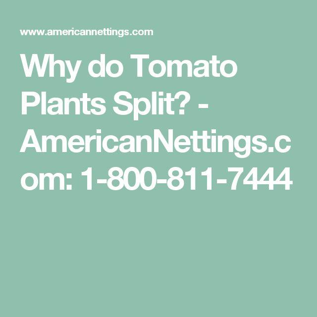 Why do Tomato Plants Split? - AmericanNettings.com: 1-800-811-7444