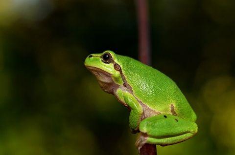 「カエル」の画像検索結果