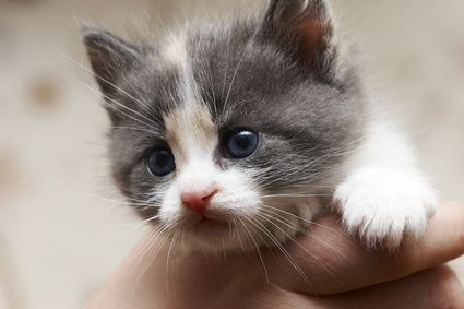 What Does a Five Week Old Kitten Need? Kitties Newborn