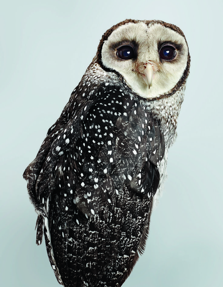 9 Beautiful Portraits of Rescued Owls | Atlas Obscura.