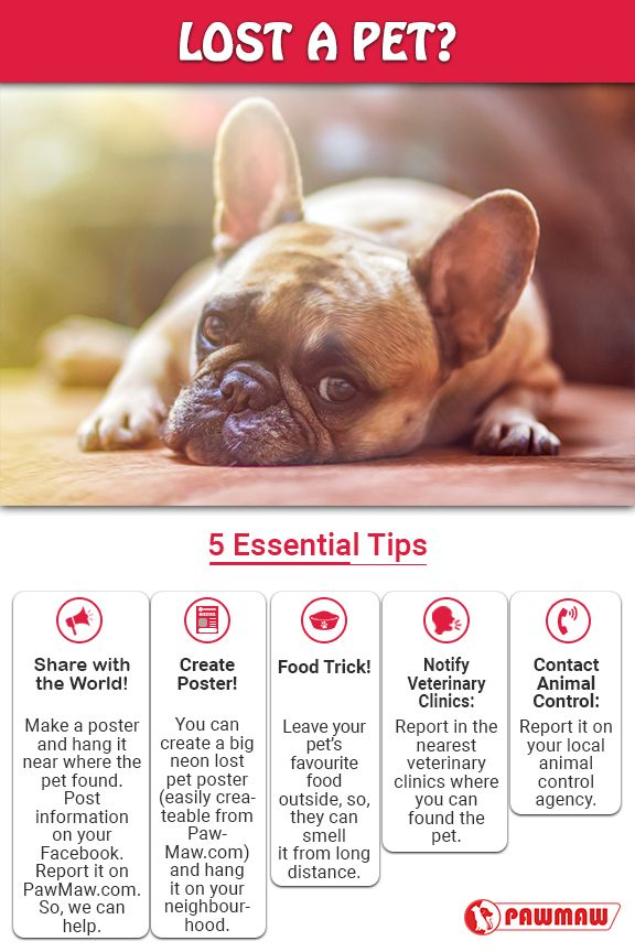 Top 10 Ways To Find Your Missing Cats And Dogs Losing A Pet Pet Clinic Pets