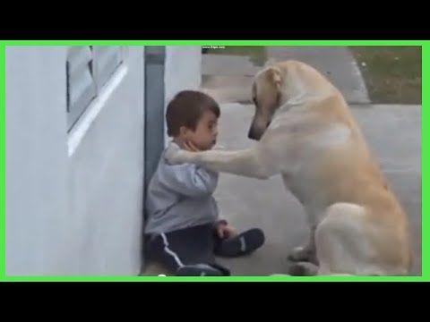 Videos de Animales Protectores y Tiernos, Que lindos !! Recopilacion de ...