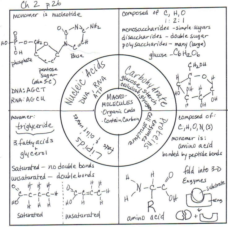 biological molecules worksheet - Termolak