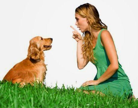 Formation comportementaliste canin: La formation comportementaliste canin Visitez le blog : http://lecomportementalistecanin.blogspot.fr/