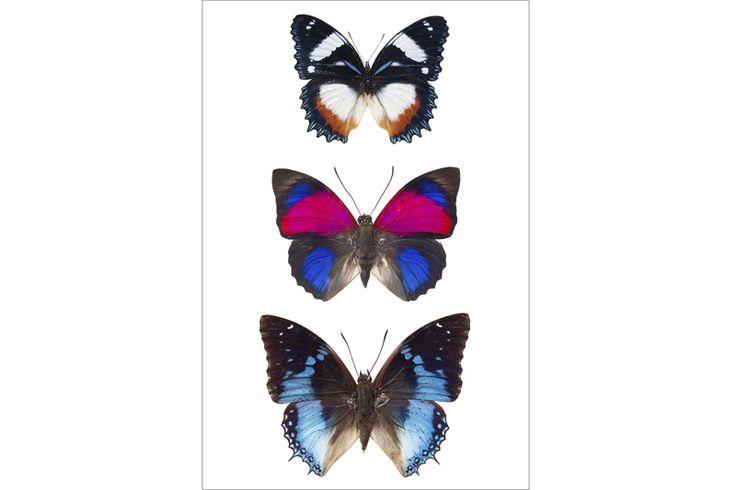 Poster vlinders van Curious Collections op DaWanda.com