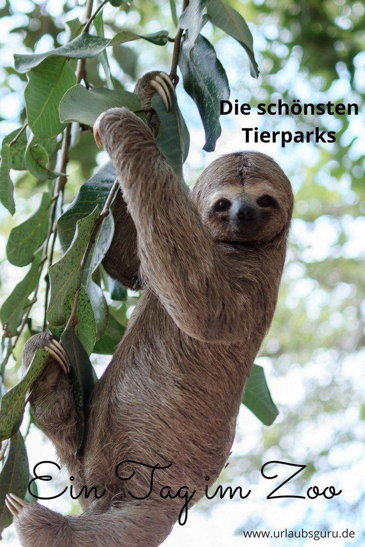 Die schönsten Zoos in Deutschland warten auf euren Besuch! Welches die beliebtesten in Deutschland sind, erfahrt ihr in diesem Artikel!