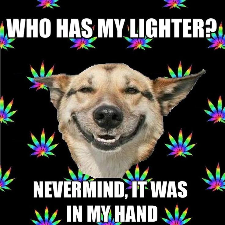 How many stoners have asked this question? #stoner #fail# funny #cannabis #marijuana #meme #weed #lighter #dog #crazy #memory