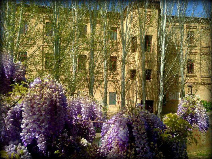 """""""Si tienes un jardín y una biblioteca, tienes todo lo que necesitas."""" Marco Tulio Cicerón. Trasera de la Biblioteca Pública Municipal Manuel Alvar en el Parque Delicias de Zaragoza."""