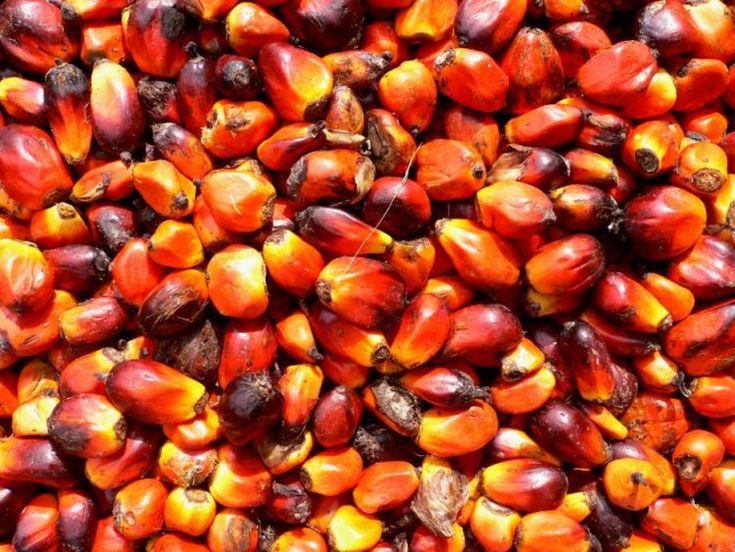 Grasa de palma, la consumes a diario aunque no lo sepas