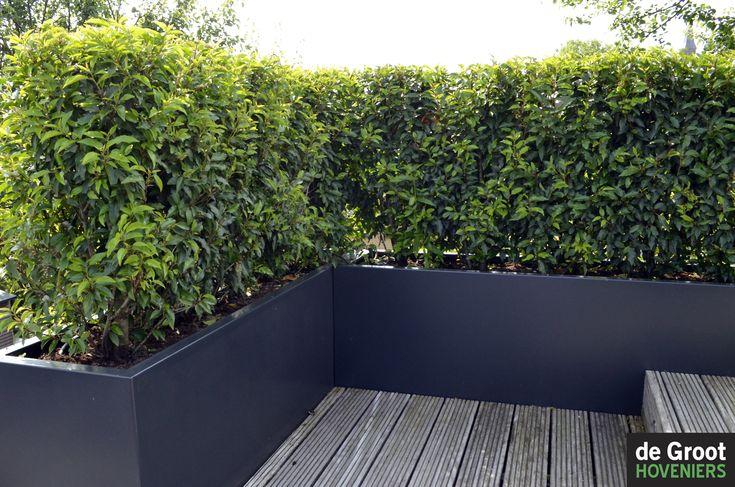 Plantenbakken gebruikt om op een dakterras een afscheiding te maken in deze bakken is portugese - Bamboe in bakken terras ...