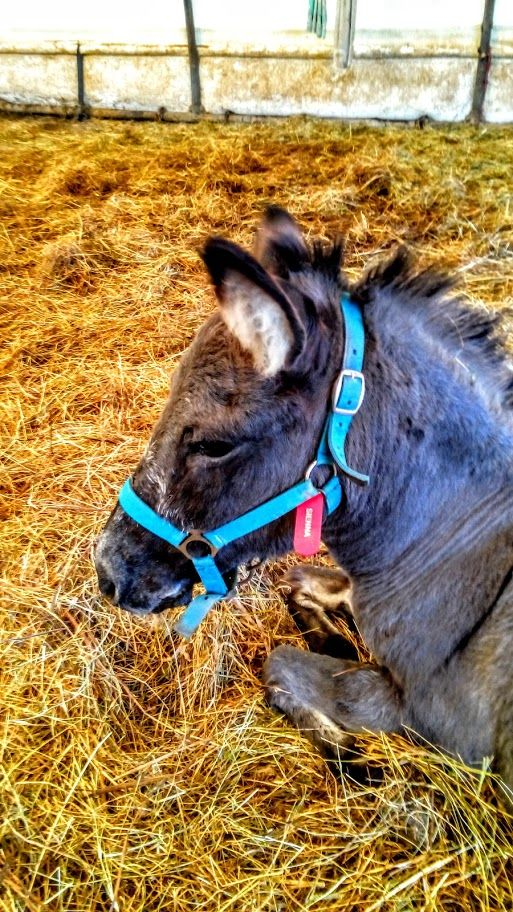 Sienna from Corfu Donkey Rescue