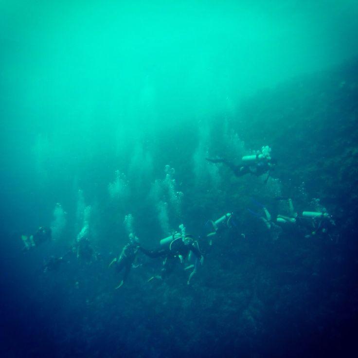 Buceando en Blue Wall San Andrés Island  CLUB SUB ACUÁTICAS LEONES DE MAR PEREIRA
