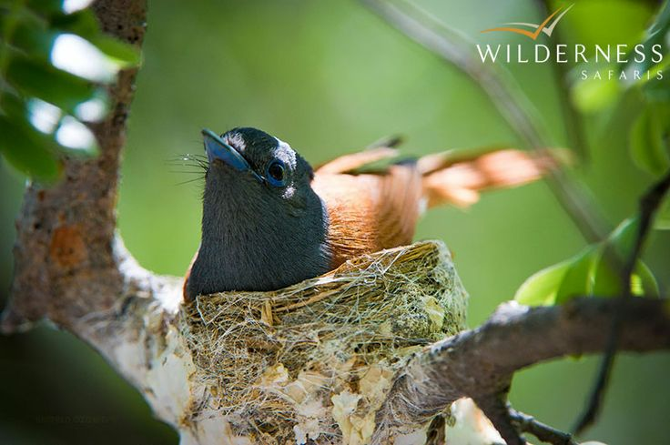 Ongava Lodge - 10 of Namibia's 14 endemic bird species have been recorded in the 340 species on Ongava.  #Africa #Safari #Namibia