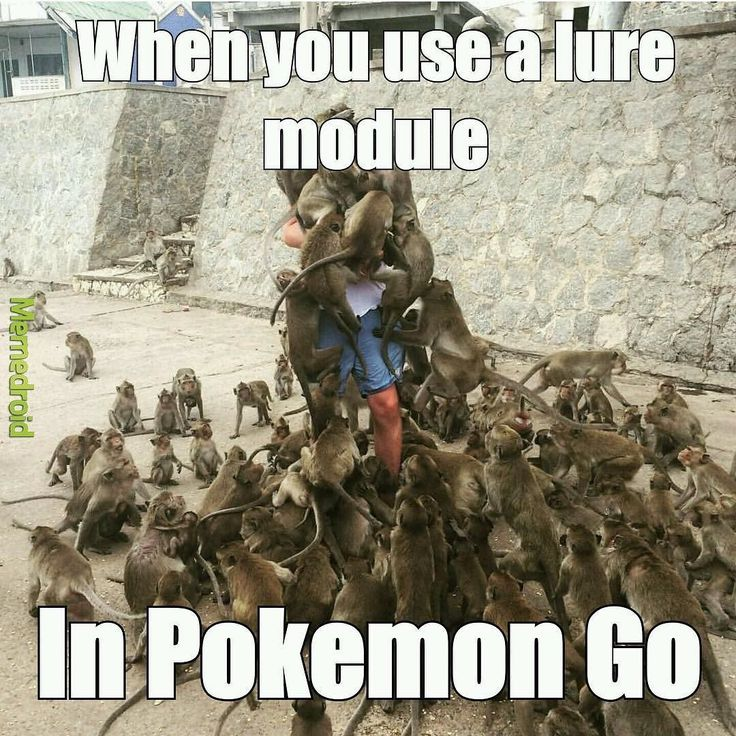 Lures in Pokemon GO be like... #pokemon #mobile #games #PokemonGO #pokeball #poketrainer #follow #teamvalor #videogame #gamer #nintendo #PokemonShuffle #teaminstinct #Niantic #pokemongiveaways #childhood #GottaCatchEmAll #gaming #charizard #pikachu #pokecoins #teammystic #pokemontrainer #followme #look #instalike #playing #online #winning #videogames