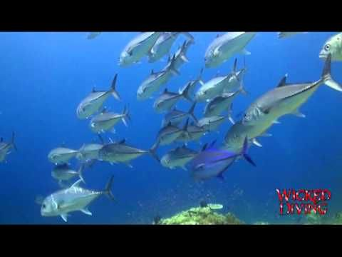 Here is an overview of what we do at Wicked Diving Thailand. From Similan liveaboards to our unique Khao Sok Lake diving and expeditions - Wicked Diving offers a broad selection of safe adventures.