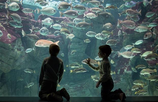 Τα μέλη του Bonus Club εξερευνούν τον μοναδικό κόσμο της θάλασσας στο Cretaquarium με μοναδικές εκπτώσεις! #Minoan_Bonus_club  Bonus Club members enjoy special discounts every time they explore the amazing marine world of Cretaquarium in Heraklion. http://www.minoan.gr/prosfores/619/cretaquarium-thalassokosmos