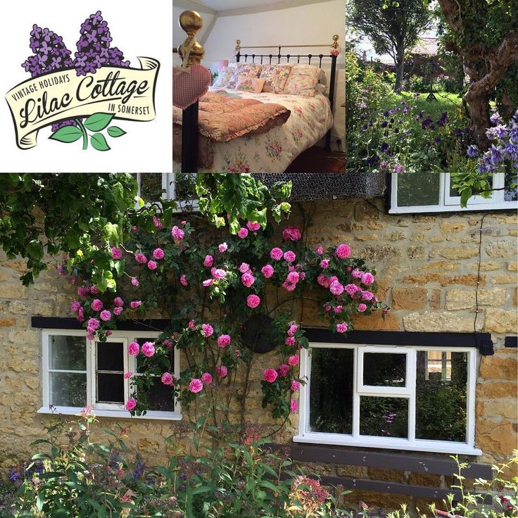 If anybody is looking for a last minute Easter break, come to Smiling Somerset! The weather forecast is looking good, Bridport street market should be fab and the amazing giant flea market is on Easter Sunday.  Lilac Cottage is ready for guests ☺️ £650 per week or £450 for the long weekend (sleeps 4) 🏡 #lilaccottage #holidaylet #somerset #westcountry #englishcountrycottage #henhousecottage