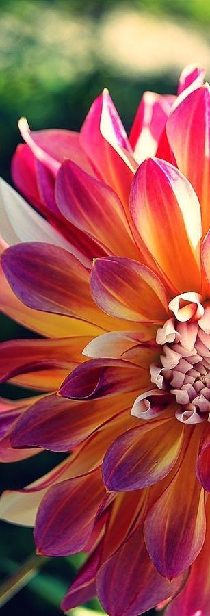 Mis ojos de mujer junto la belleza de esta flor.
