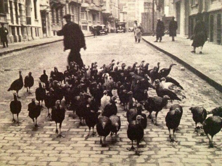 Bir zamanlar Istanbul'da hindileri sokak sokak gezdiren seyyar satıcılar vardı