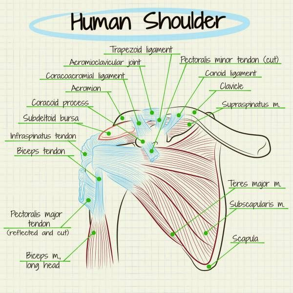How To Self-Diagnose Your Shoulder Pain. The shoulder joint is one of the most vulnerable joints in the human body. There is so much range of movement that it is surprising more shoulder injuries don't occur. #shoulderpain