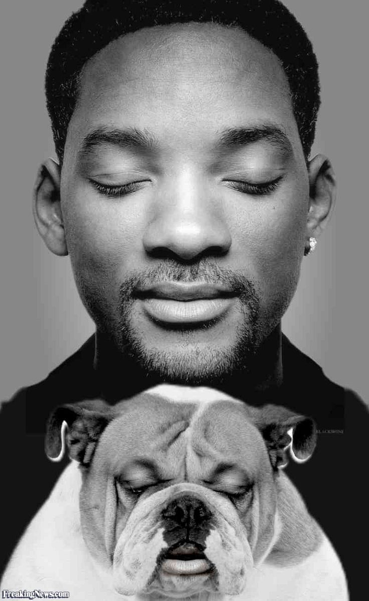 61 best images about celebrity dogs on pinterest pets