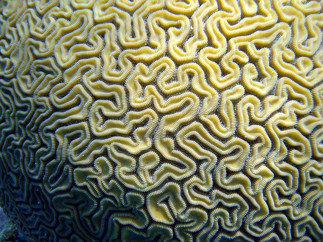 Brain Coral #fractals #fractalart #art A brainwave : https://www.linkedin.com/groups?home=&gid=4203602&trk=anet_ug_hm