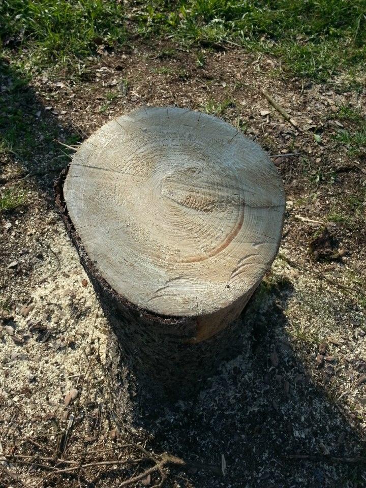 Platoul Cornesti 27 copaci msacrati dintr-un sut