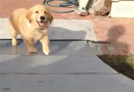 Here I Come…There I Go. Puppy slide.
