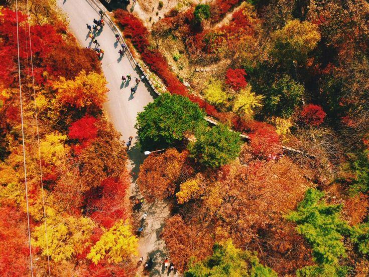 the best autumn in korea ideas seoul daedunsan mountain the cloud bridge a south korea fall colors guide