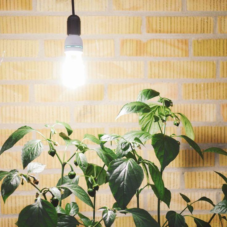 Lysande växtbelysning lågenergilampa 30W