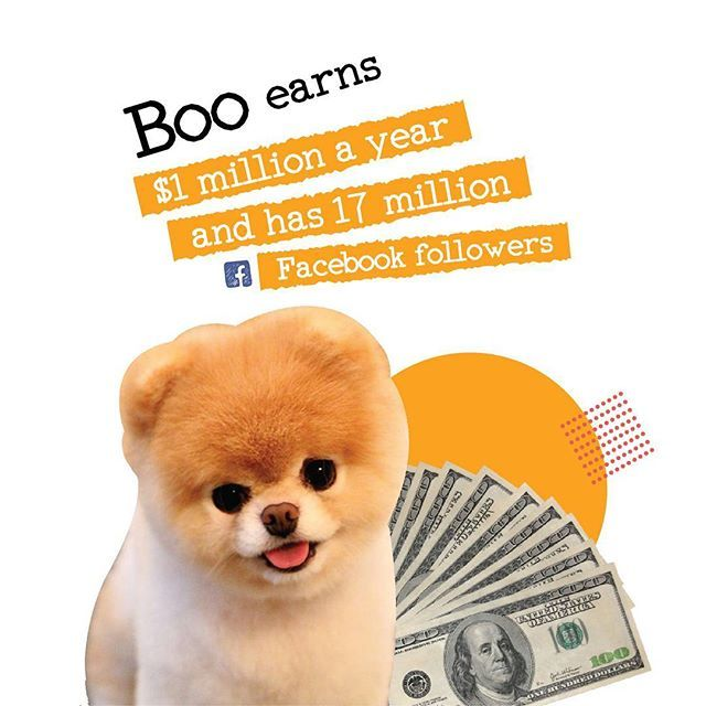 """Well thats one rich doggo😍  #RETHINKMARKETING #SEM #onlinemarketing #digitalmarketing #SEO #instalike #dog #dogsofinstagram #boo #facebook #instagood #instadaily #instagram #igers #iger"" by @duncanandwilliams. #myazariamakasar #myazariajakarta #peluangusaha #testimonimyazaria #networkmarketing #myazariasurabaya #peluangbisnis #myazariaindonesia #myazariahongkong #affiliatemarketing #makemoneyonline #mci #inbound #salesfunnel #listbuilding #webmarketing #makingmoney #successmindset…"