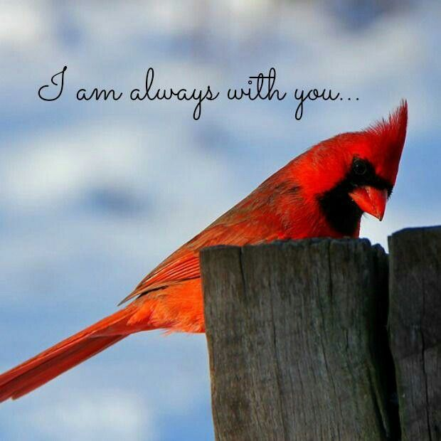 Beautiful Cardinal means someone in heaven is visiting you <3 MOM <3