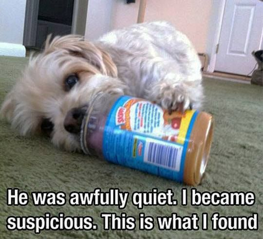 This would be something Id find my dog doing...LOL