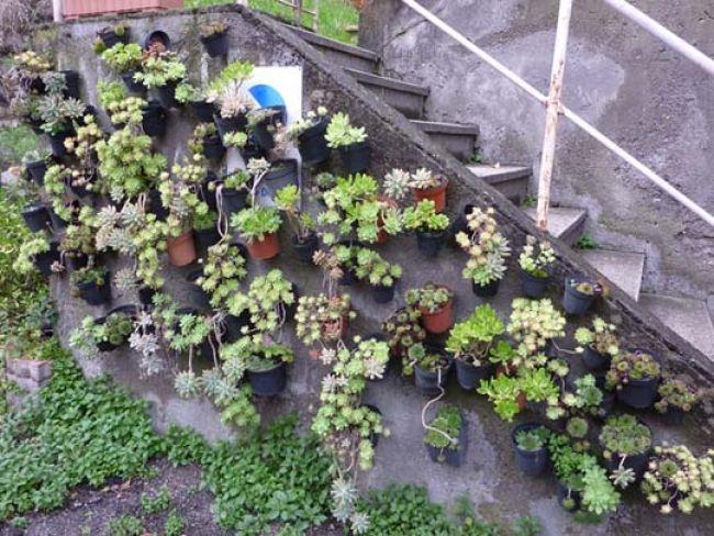 17 migliori idee su giardino di piante grasse su pinterest - Composizione piante grasse giardino ...