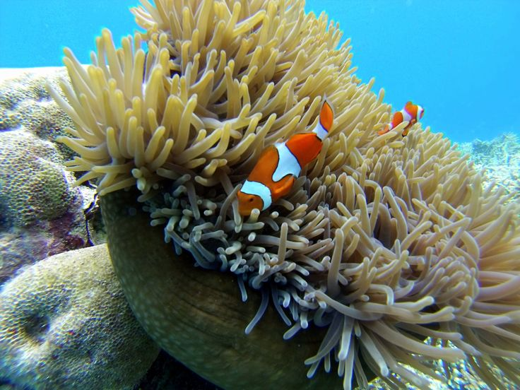 Great Barrier Reef, Port Douglas – Australia | thecruisewife