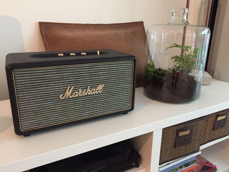 Marshall radio, terrarium
