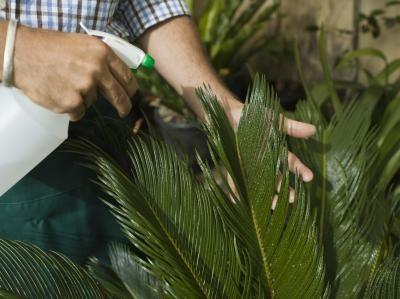 Como fazer nutrientes caseiros para plantas hidropônicas   eHow Brasil