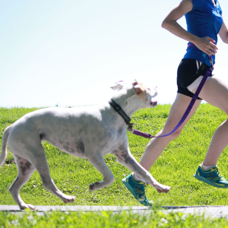 10 Ways To Stay Safe While DogRunnin