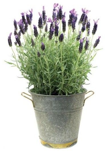 i love to smell herbs near outdoor sitting areas spearmint basil and lavender are among the. Black Bedroom Furniture Sets. Home Design Ideas